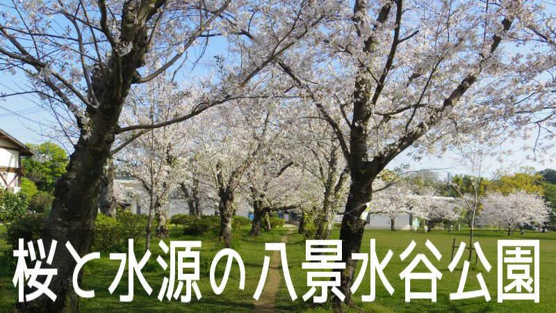 水源を有する熊本市の水道発祥の地で桜の名所「八景水谷公園」